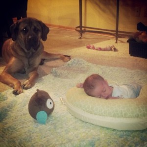 lucy and ricky, english mastiff, english mastiff picture, english mastiff photo, puppy picture, puppy photo, dog and baby